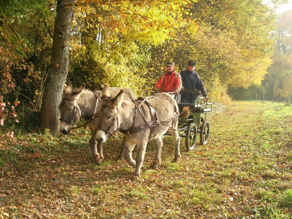 Randonnée évasion en calèche avec des ânes - Le Mt Sion au départ du Châble