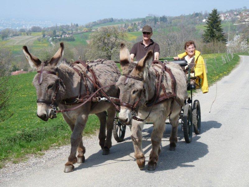 Balade en calèche avec des ânes - Découverte des Chartreux au départ de Beaumont