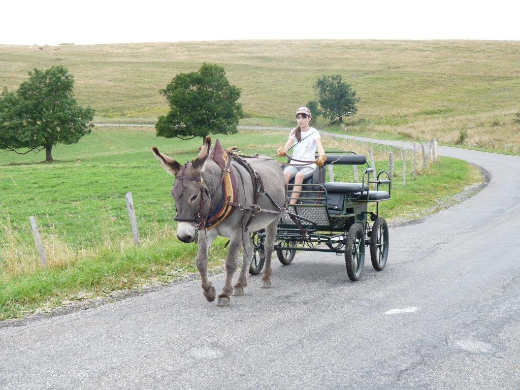 Anniversaire enfants Montagne - Balade en calèche au départ de Beaumont